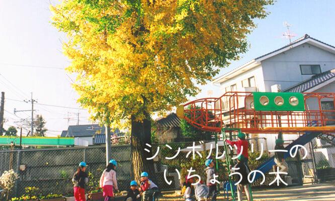 シンボルツリーのいちょうの木